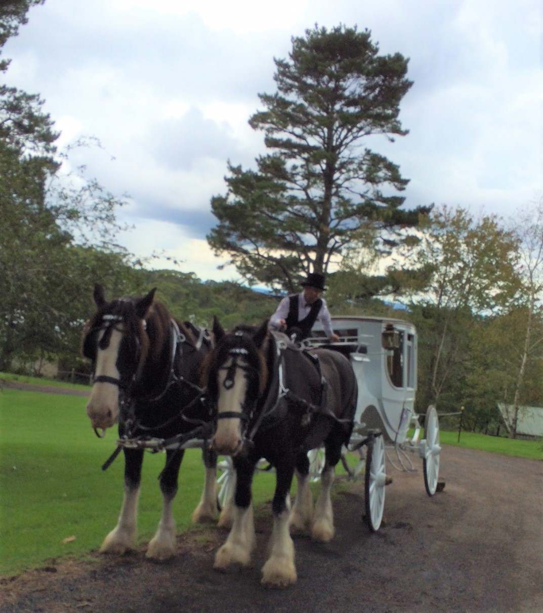 Horse & Carriage 29.03.2018