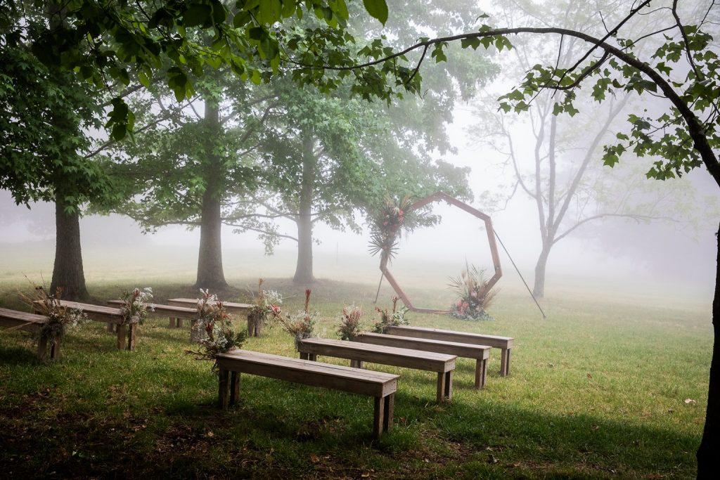Avenue of trees 11
