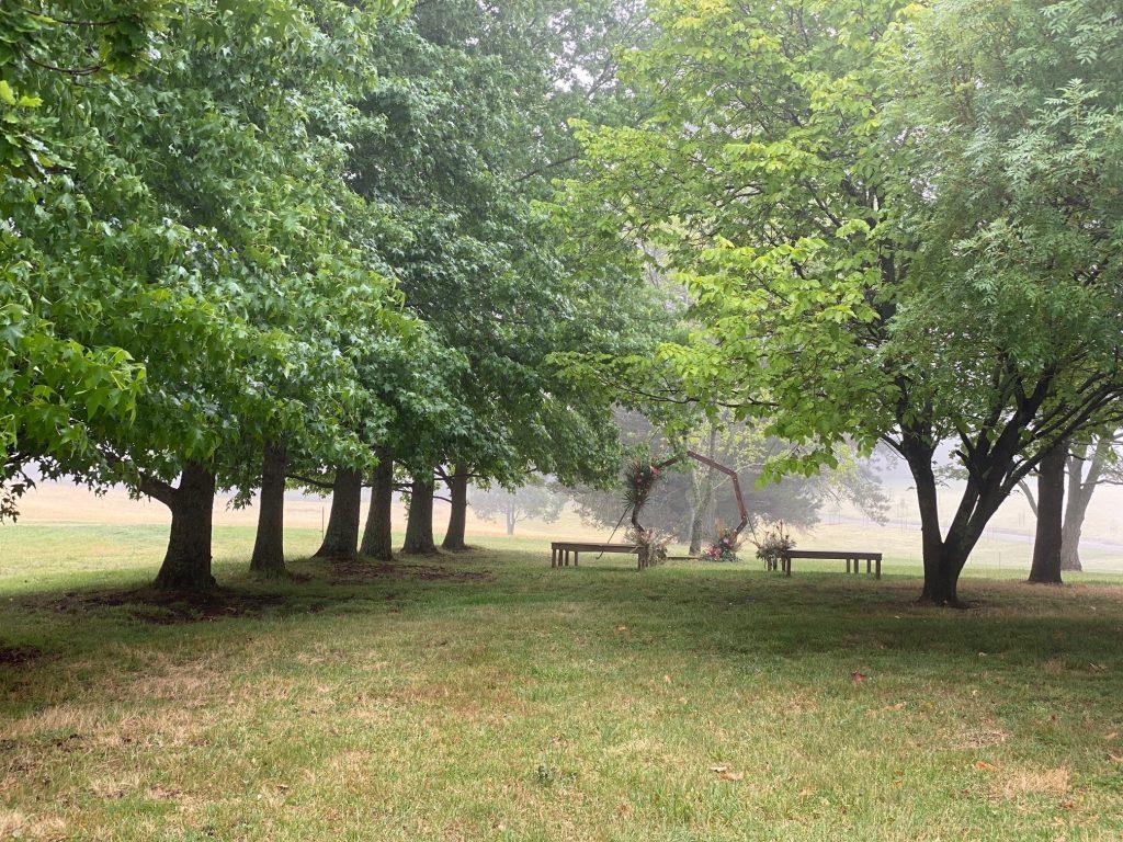 Avenue of trees 18