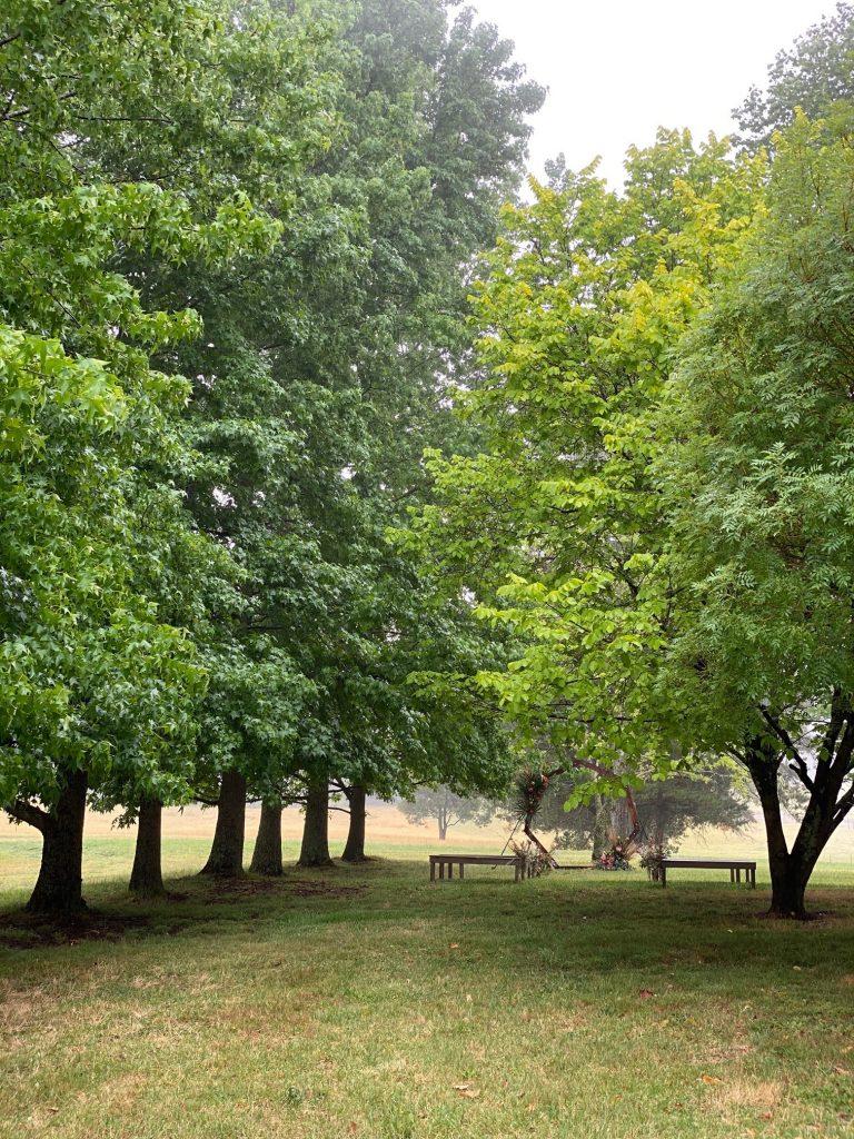 Avenue of trees 20